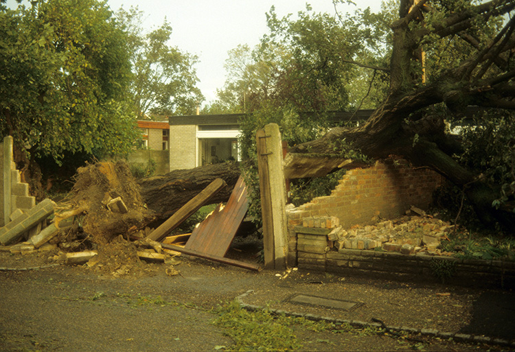 Great storm, Greenwich Park, 1987