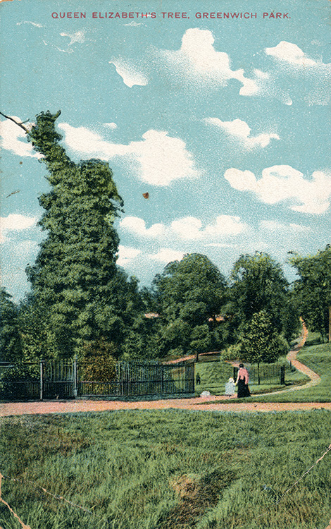 Queen Elizabeth's tree, Greenwich Park, 1905